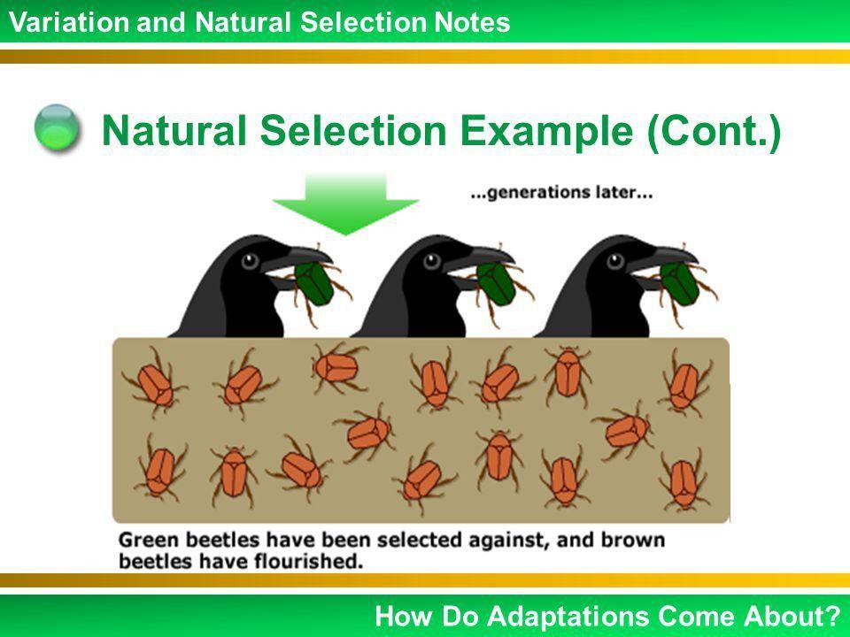 Charles Darwin Mutations Variations Natural Selection Adaptations ...
