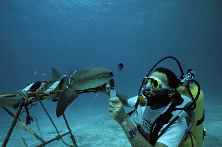 Marine Biologist - Career Profile