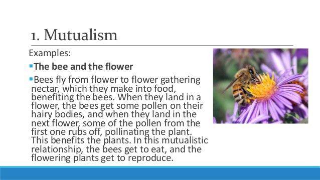 Unit 5, Lesson 5.3- Ecological Relationships