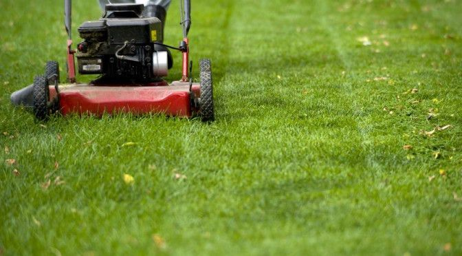 Annual Lawn Maintenance | Bill's Yard Service