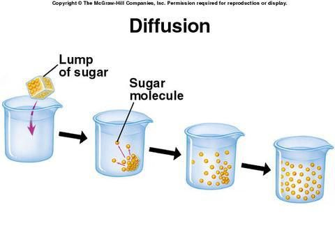 biology diffusion experiment