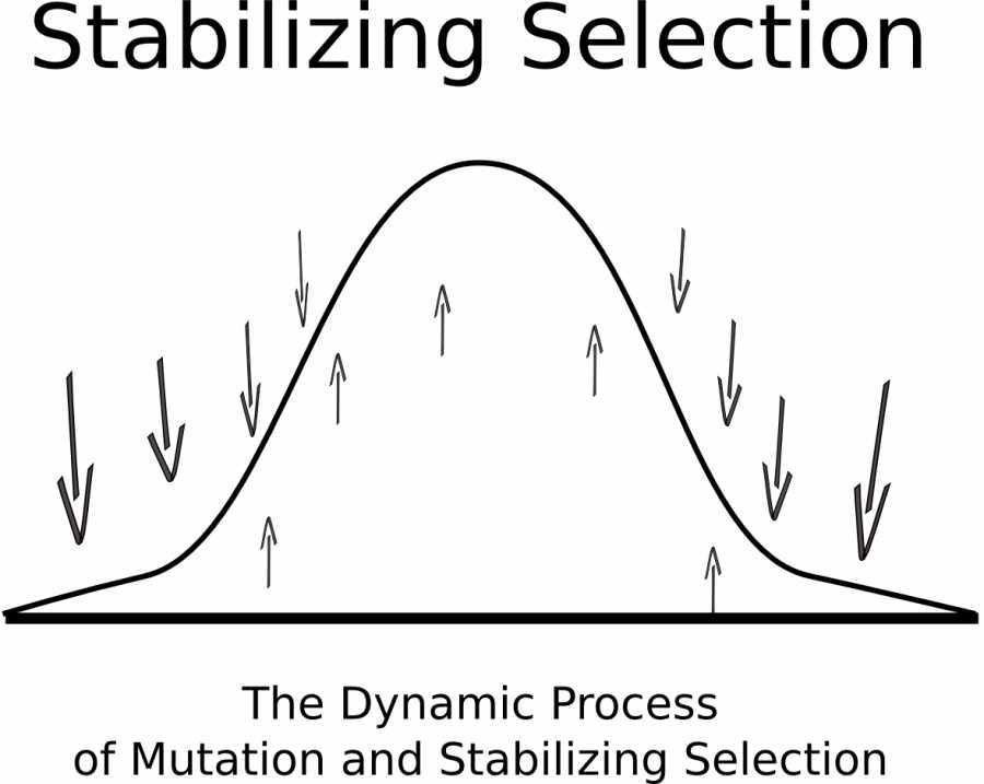 The Modes of Natural Selection – Greg Laden's Blog