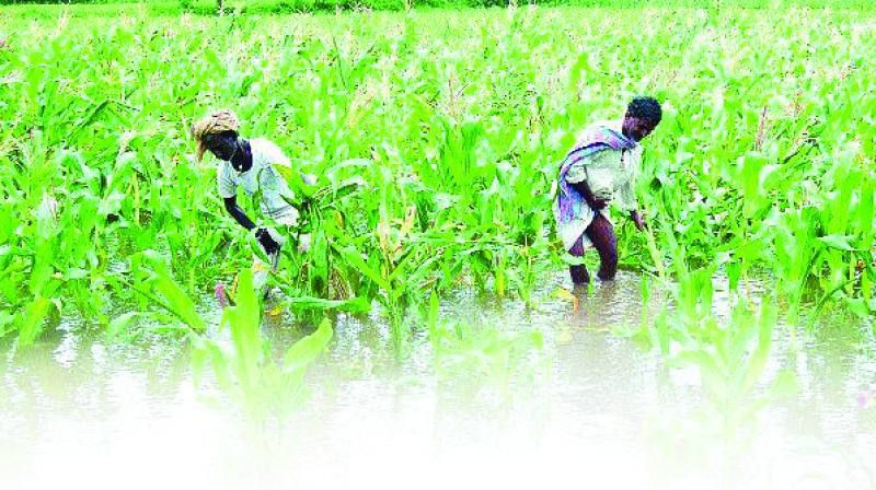 Banks give private company loans worth Rs 328 crore in name of farmers