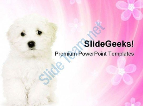 Cute Dog Animals PowerPoint Templates And PowerPoint Backgrounds ...