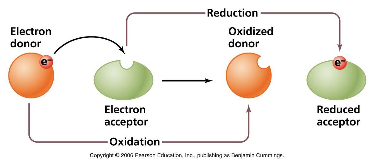 REDOX REDUCTION (2) baru.pptx