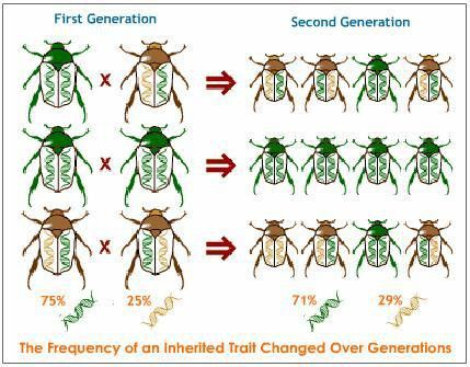 Evolution, Heredity and Evolution, Science Help, Online Science ...