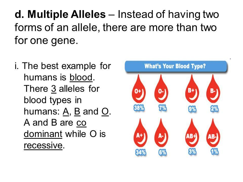 D. Multiple Alleles – Instead of having two forms of an allele ...