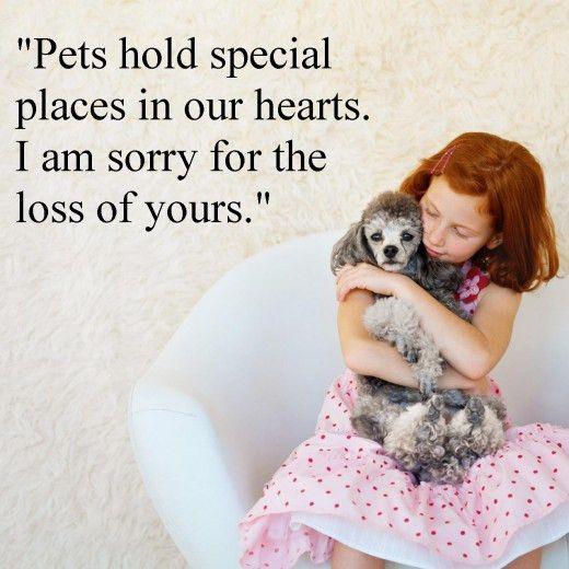 Sympathy Messages for Pet Loss: Pet Loss Sayings - Wishes Messages ...
