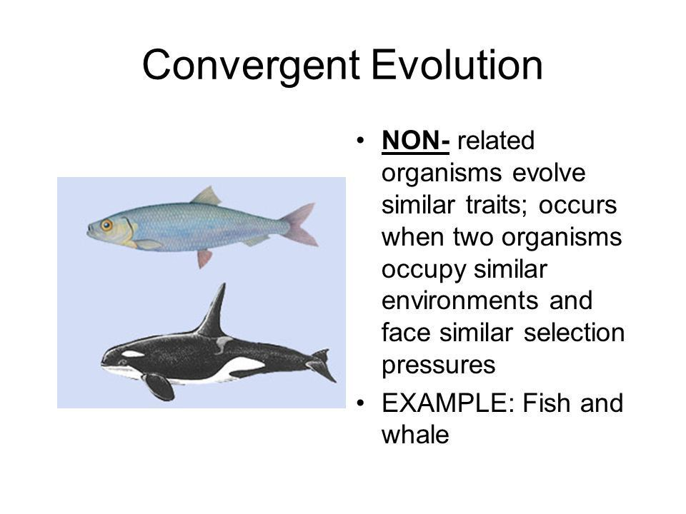 Natural Selection and Evolution - ppt video online download