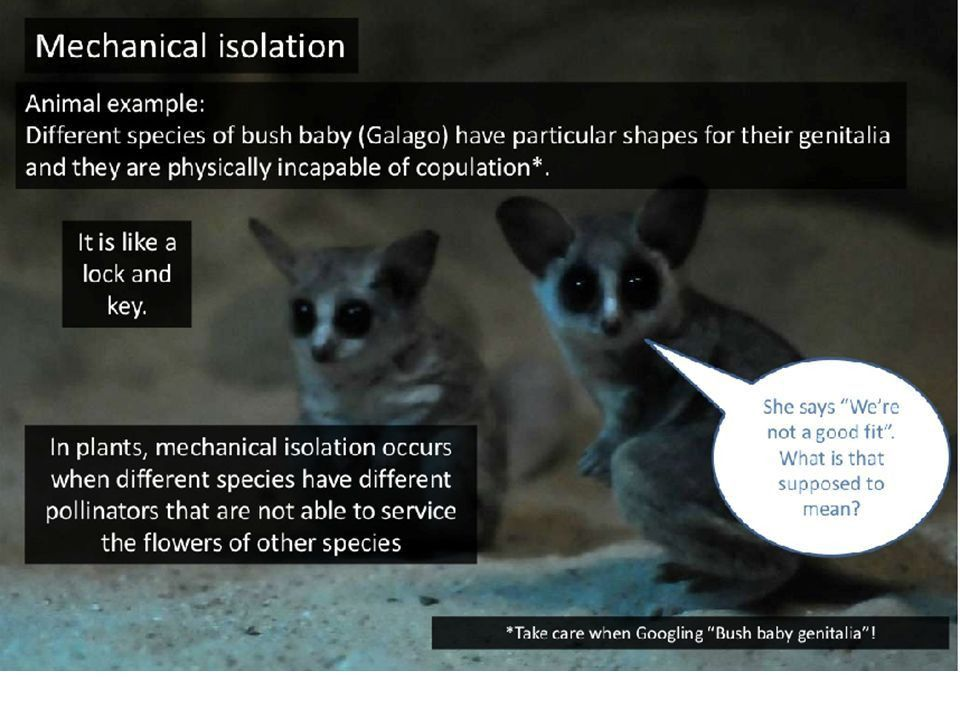 The Origin of Species Crash Course Video: - ppt video online download