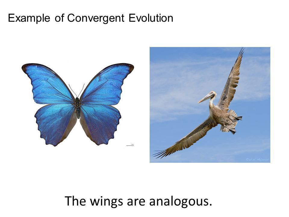 Homologous and Analogous Structures - ppt download