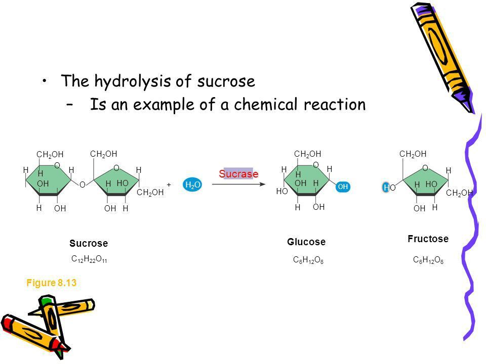 An Introduction to Metabolism - ppt download