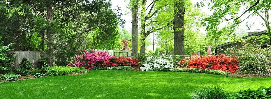 Organic Lawn Fertilization and Weed Control Service | BR Green
