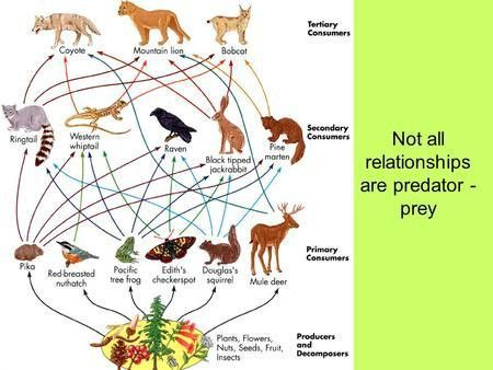 What is symbiosis? What are the different kinds of symbiosis ...