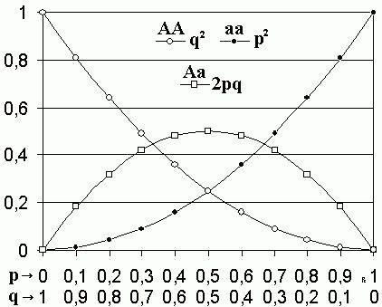 Talk:Hardy–Weinberg principle - Wikipedia