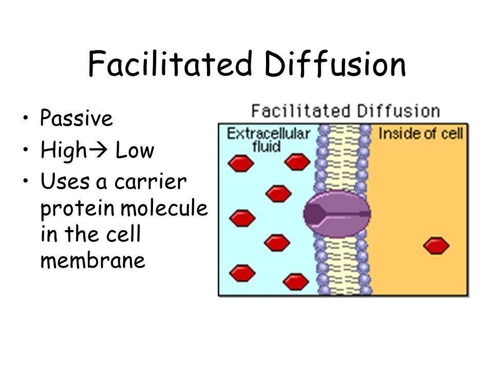 L.E. Bio Unit 3 Movements Through Cell Membranes 1.Passive ...