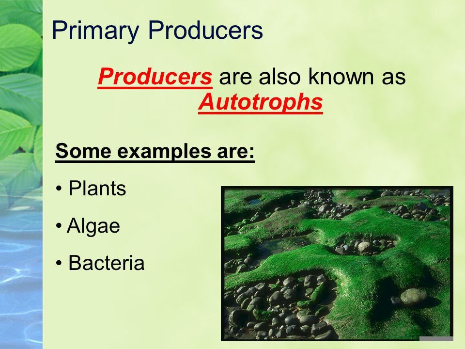 Ecosystems and Energy Biology. - ppt video online download
