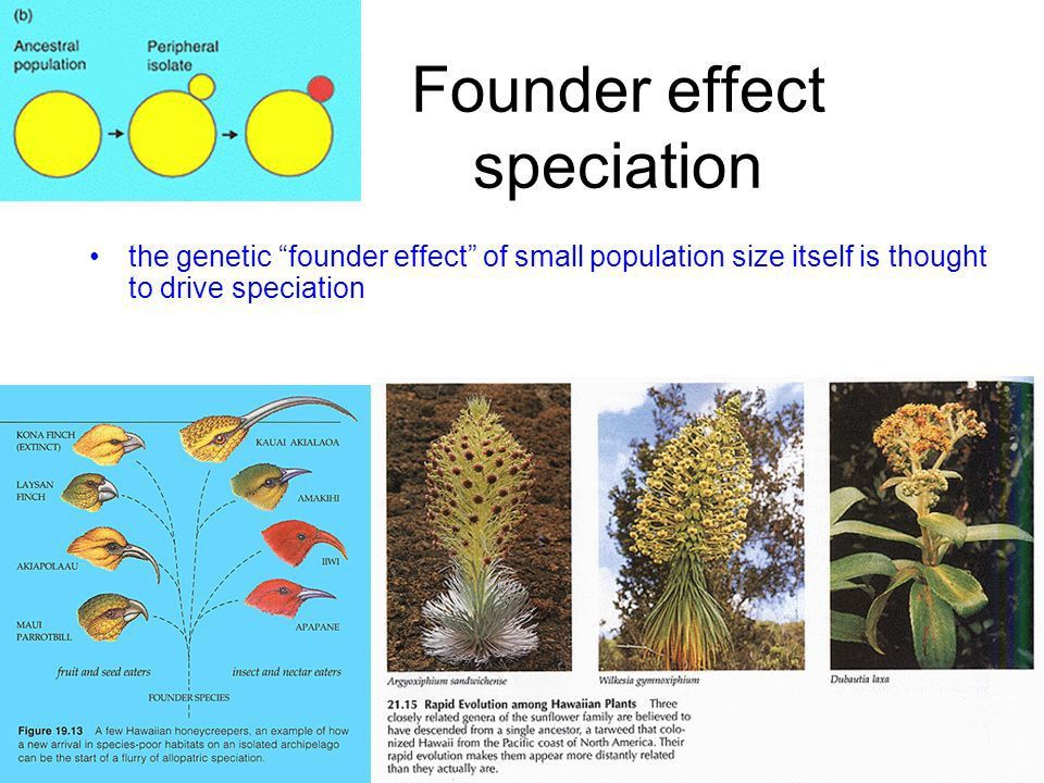 The geography of speciation - ppt download
