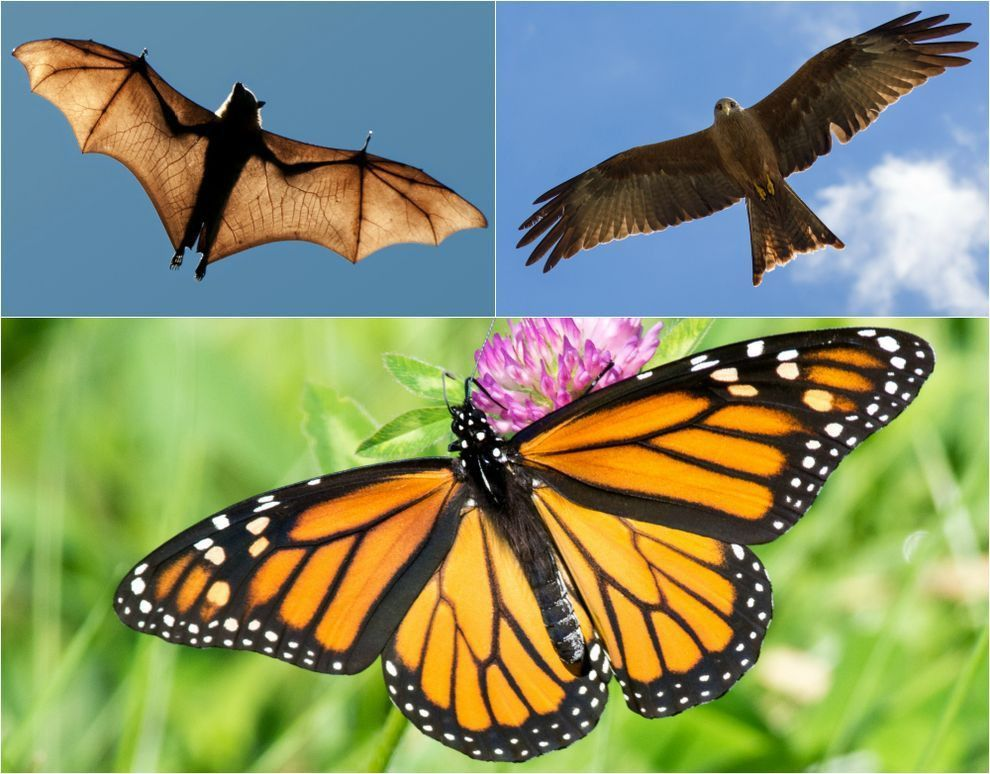 8 uncanny examples of convergent evolution | MNN - Mother Nature ...