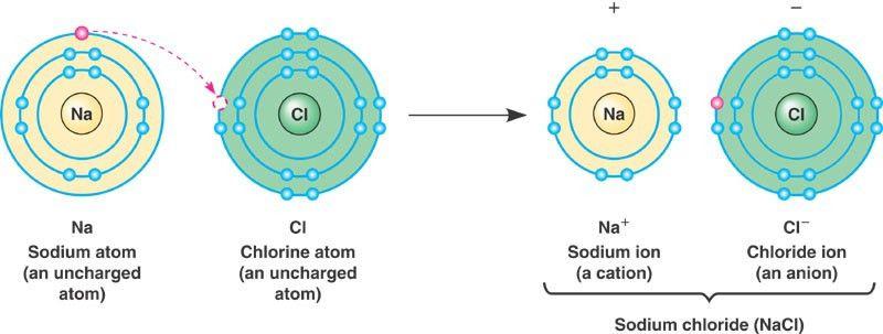 Ionic bond > Talk2Bio