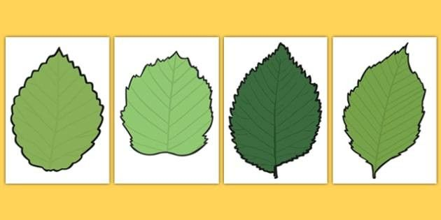 Leaf Templates - blank, leaf, templates, autumn, display