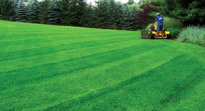 Vantage Property Solutions Providing Lawn Care, Landscaping ...
