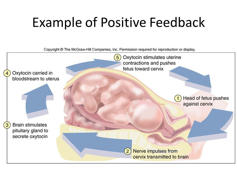 Positive and Negative Feedback Loops. A. Negative Feedback CO 2 ...