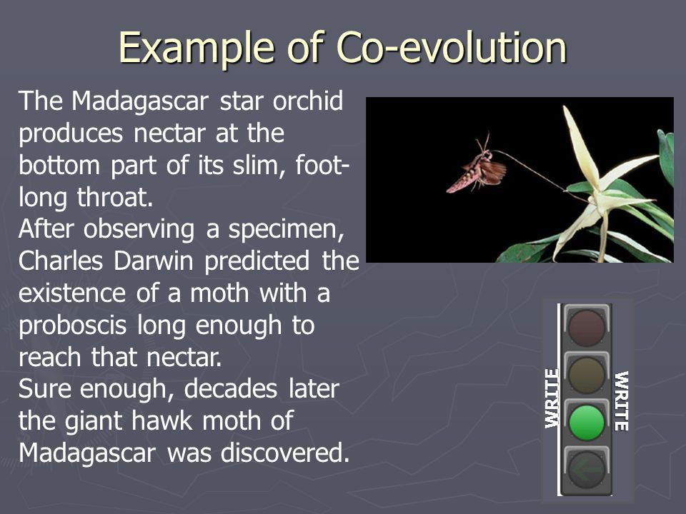 Chapter 5: Evolution and Community Ecology - ppt video online download