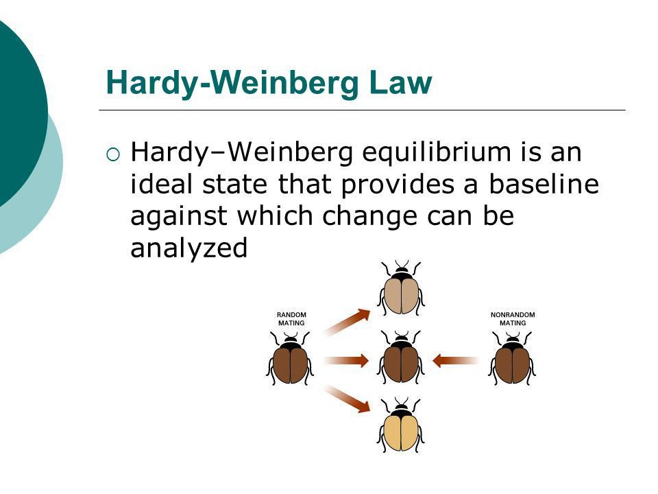 Mechanisms of Evolution Hardy-Weinberg Law.  The Hardy–Weinberg ...