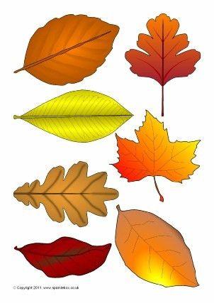 Autumn Season Primary Teaching Resources and Printables - SparkleBox