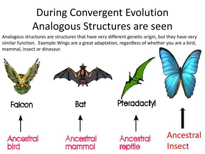 PPT - Types of EVOLUTION Divergent vs. Convergent PowerPoint ...