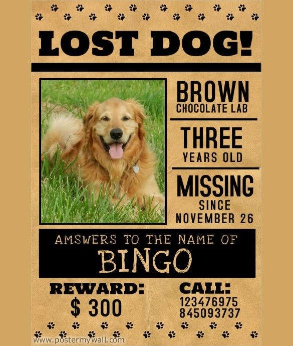 Lost Pet Flyers – 15+ Free PSD, AI, Vector EPS Format Download ...