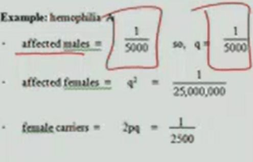 Genetics Exam I (Population Genetics ) Flashcards   Memorang