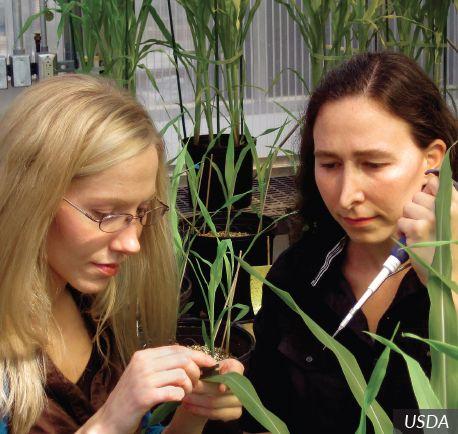Plant Biologist   Career Profile   AgCareers.com