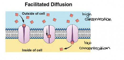 What are the Different modes of biotransportation of drugs - how ...