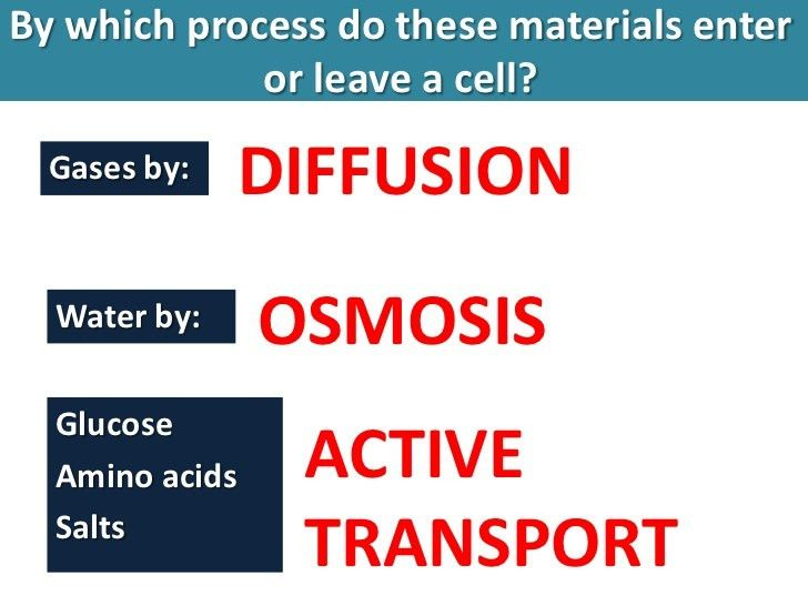 Osmosis, diffusion, active transport