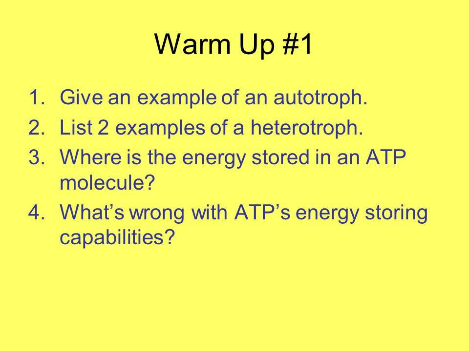Photosynthesis – what you really need to know…. Warm Up #1 1.Give ...
