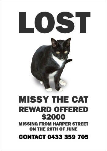 Me a Poster of My Missing Cat (19 pics)