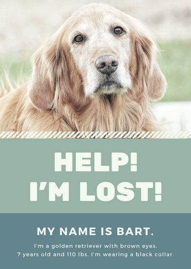 Blue and Green Diagonal Line Lost Dog Flyer - Templates by Canva