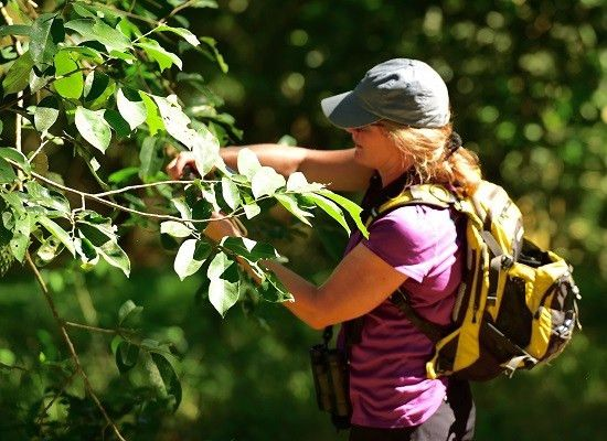 Jobs for people who love being outdoors : Career Outlook: U.S. ...