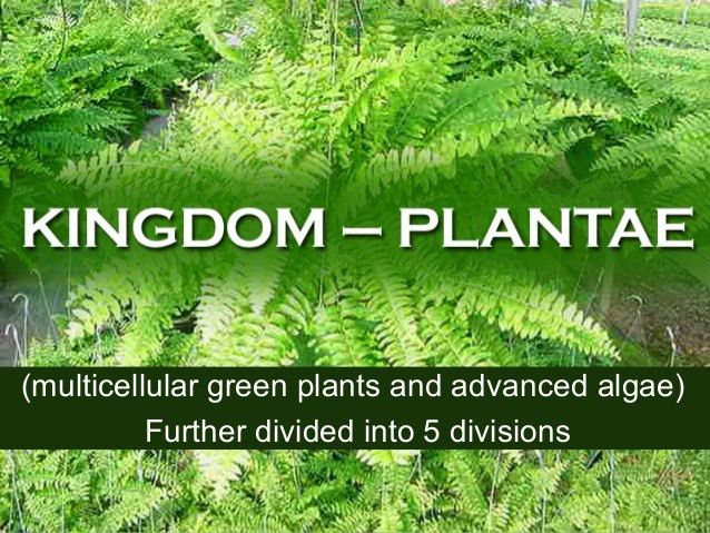 Plantae - Kingdoms of Life
