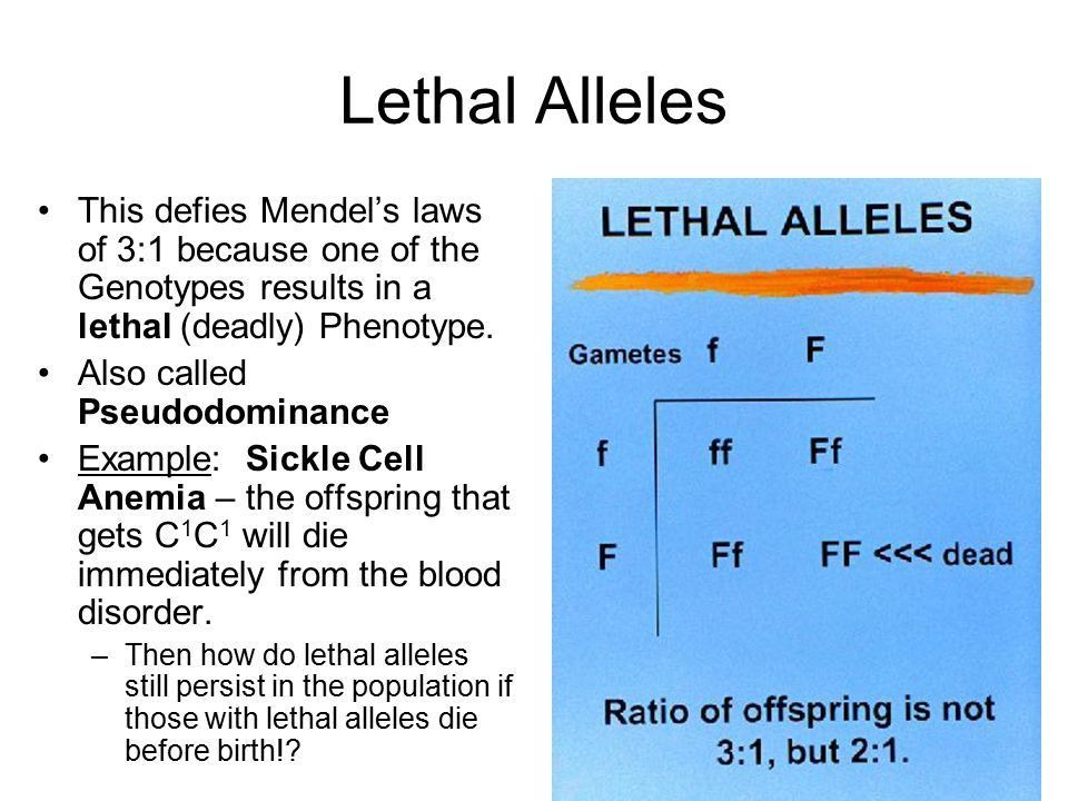 Revisions to Mendel Some alleles are neither dominant or recessive ...