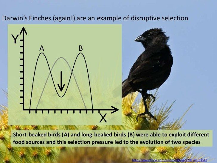 IB Biology Option D.2: Species and speciation