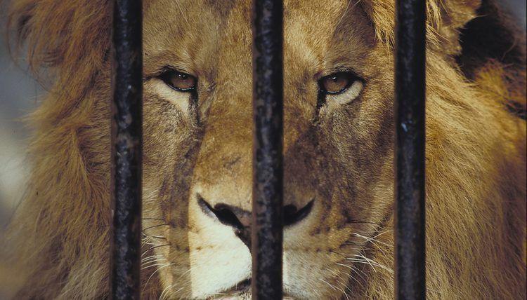 Animal Curator Job Description | Career Trend