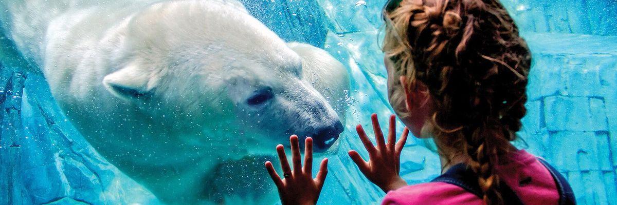 Jobs - Senior Zoo Keeper