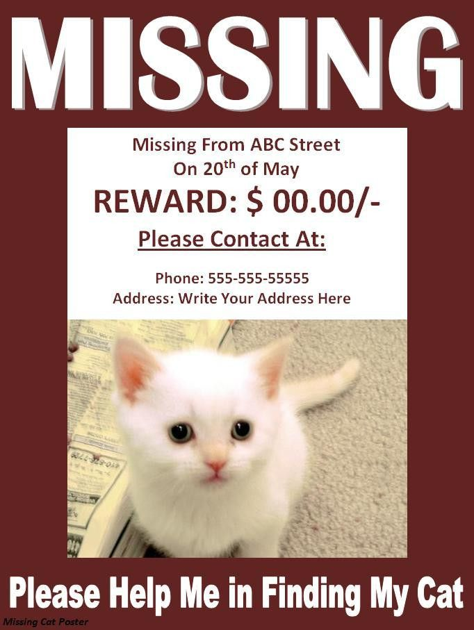 Missing Cat Poster - Best Word Templates