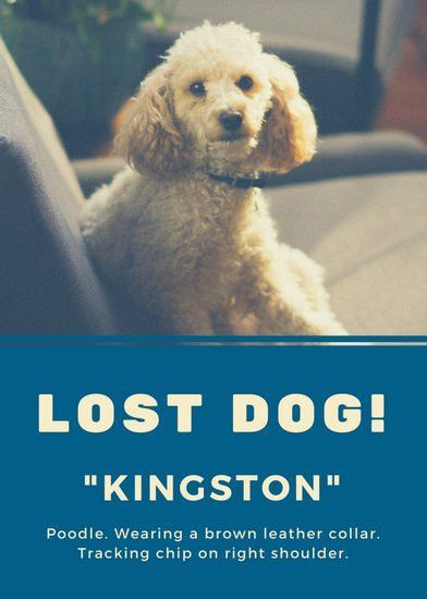 Blue Photo Lost Dog Flyer - Templates by Canva