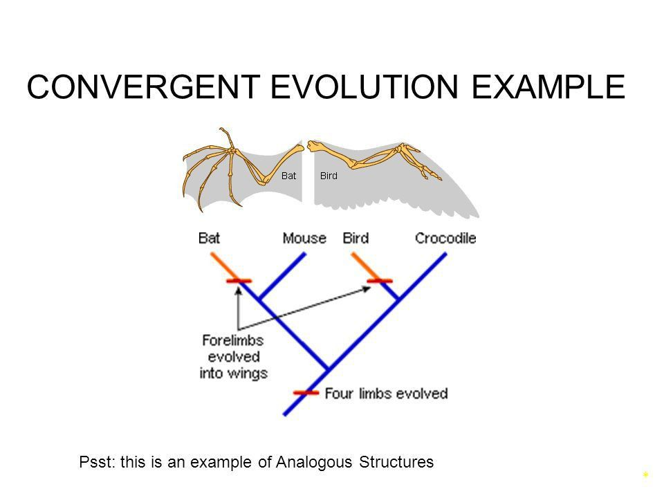 Speciation & Patterns of Evolution - ppt video online download