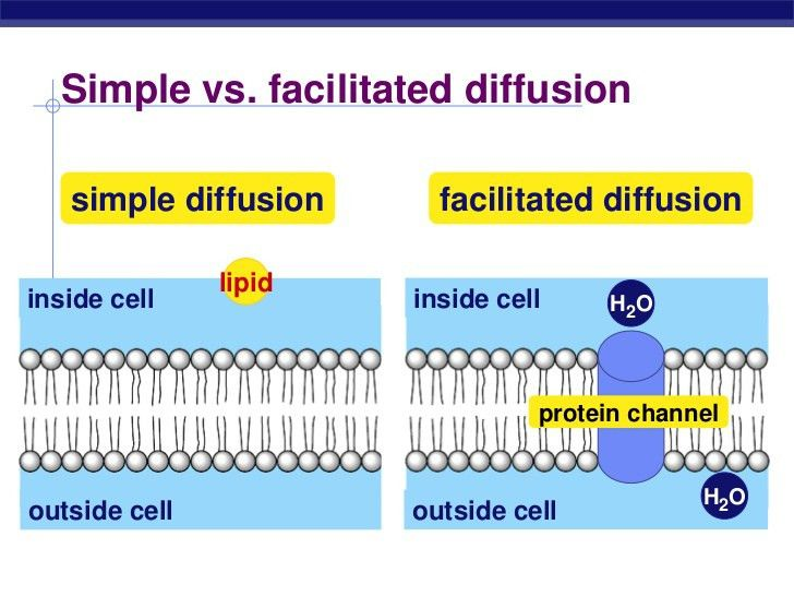 Cell Membranes and Transport - Biology