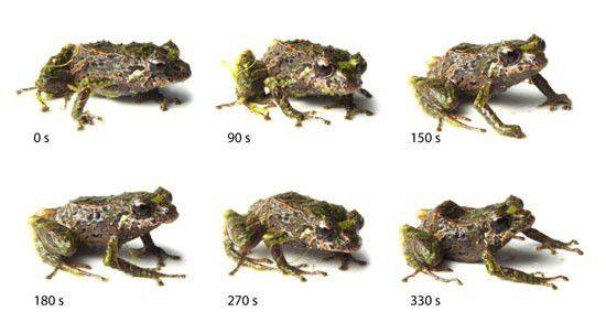 Phenotypic Plasticity and the Discovery of the Shape-Shifting Frog ...